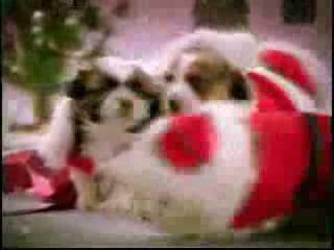 Villancico cantado por perros