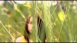 MONITA - kekasih sejati (fan made Video Clip)