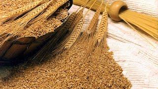 الفوائد الغدائية لنخالة القمح مع نبيل العياشى