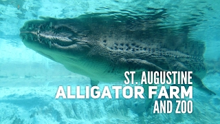 Visit to the St. Augustine Alligator Farm & Zoo!
