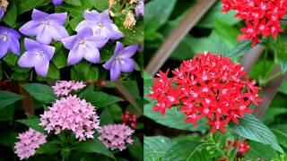 Descubre nuestros maravillosos jardines repletos de rincones especiales donde cuidamos hasta el más mínimo detalle.