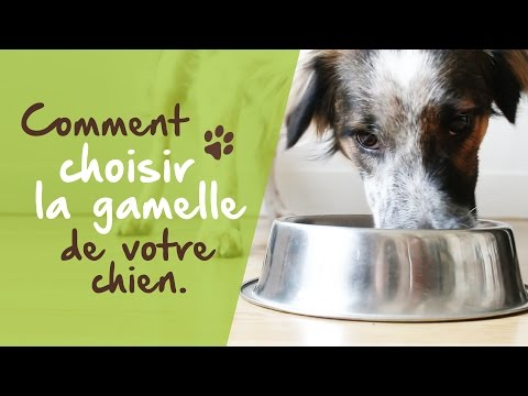 Comment choisir la gamelle de votre chien