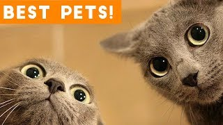 Video Best Animal Videos of 2018 (so far) | Funny Pet Videos MP3, 3GP, MP4, WEBM, AVI, FLV Agustus 2018