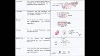 En este corto video te mostramos cómo es la organización de los diferentes niveles en los seres vivos, comenzando por el átomo,...
