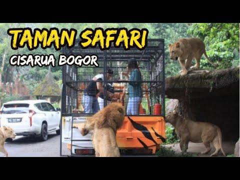 Taman Safari Cisarua Bogor Terbaru | Wisata Tanah Air