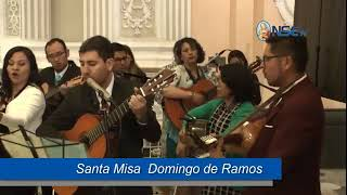 Santa Misa Domingo de Ramos