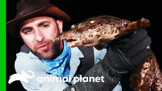 Searching For A Wobbegong Shark On Australia's Coast   Coyote Peterson: Brave The Wild by Animal Planet
