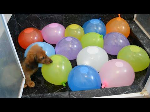 Favorite Video Friday ? Water balloon