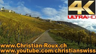 Grandvaux Switzerland  city photos gallery : UHD - Switzerland 295 (Camera on board): Vignoble en Terrasses de Lavaux - La Corniche (Hero3)