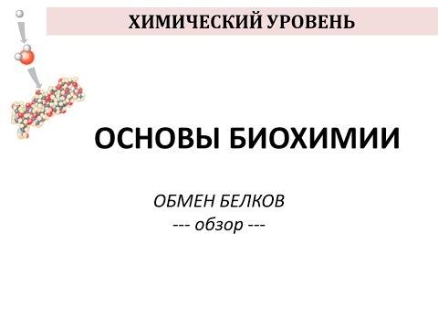 ОБМЕН БЕЛКОВ - часть 1