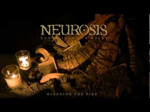 Tekst piosenki Neurosis - Bleeding The Pigs po polsku