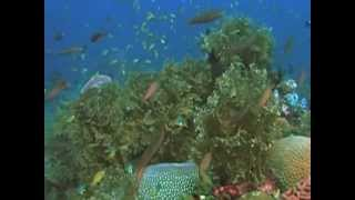 United Nations, New York, 2013 - An estimated 50-80% of all life on earth is found under the ocean surface. Today, 60% of the ...