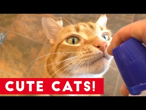 Funniest Cats And Kittens Compilation 2017 | Best Cute Cat Videos Ever