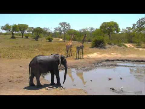 Веб камеры водопой животных