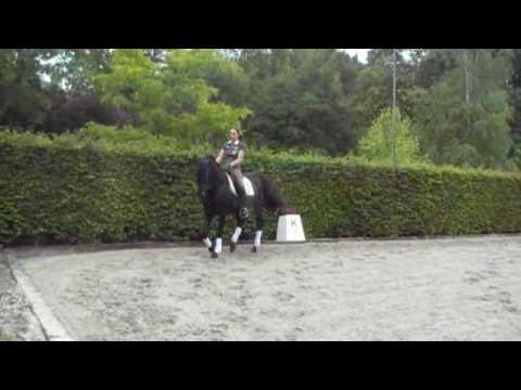 ANDALUSIAN  PRE STALLION JET BLACK FOR SALE