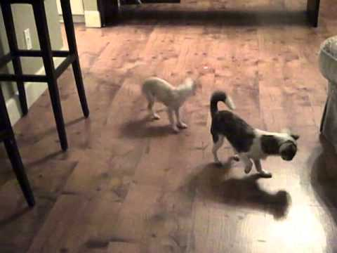 Exercising Your Dogs When It's Too Cold Outside! Chihuahua