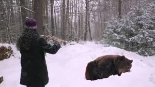 Flutist Lulls Hibernating Bear Back To Sleep