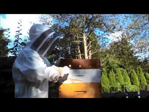 Apiary Safety