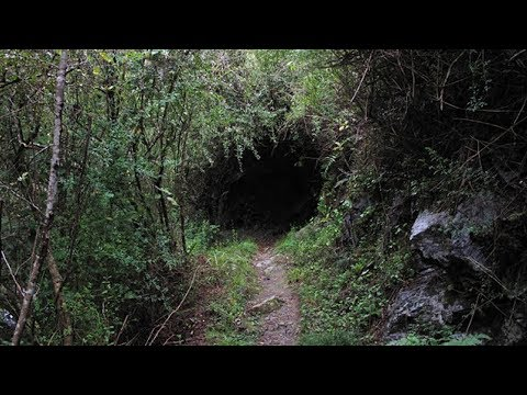 10 Creepiest Things Found In The Woods