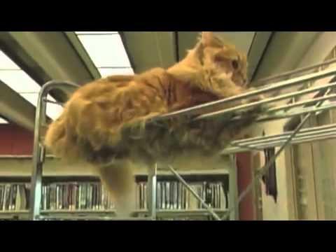 dewey, il gatto bibliotecario