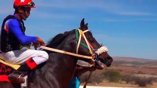 Carreras de caballos El Centro