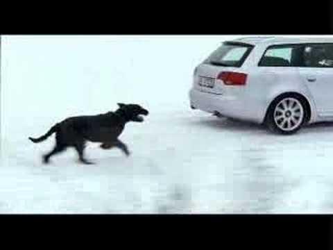 Audi Quattro vs. Dog - Sehr gelungene Autowerbung. Vier Räder/Ringe gegen vier Pfoten. Wer wird wohl das Rennen machen?
