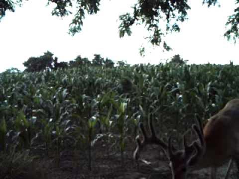 Trail Cam (2011)