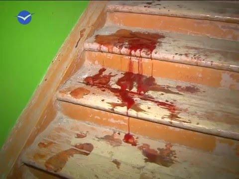 Жертвы терьера - DomaVideo.Ru