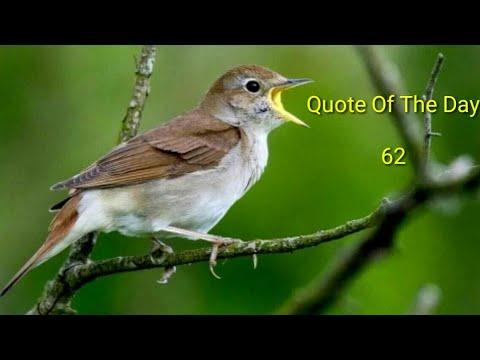 Quote Of The Day  -  62 / Daily Thoughts or Quotes  of Great Persons.