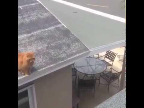 Cat Faceplant