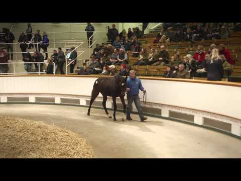 Tattersalls December Foal Sale Day 3 2014