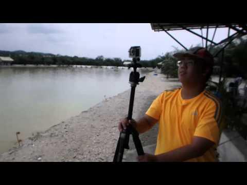 Umpan Mekong Catfish~Rawang Natural Exotic Fishing Pond  Part 3