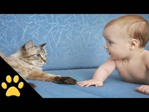 cute cats - In this cute cat and baby video, tune in to see an awesome compilation of your favorite toddlers and kittens. SUBSCRIBE TO PETSAMI: http://bit.ly/16JmSEQ Wat...
