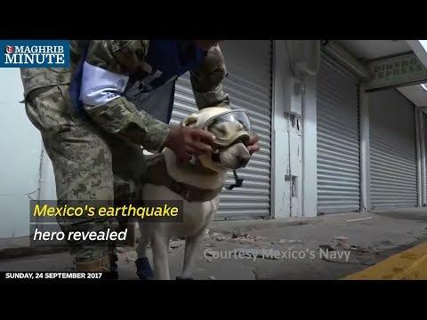Meet the four-legged hero of Mexico's deadly earthquake.