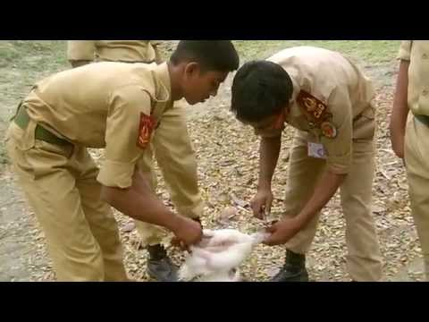 Video Cadet Survival Camping In Bangladesh Nation Cadet Corps (BNCC) download in MP3, 3GP, MP4, WEBM, AVI, FLV January 2017