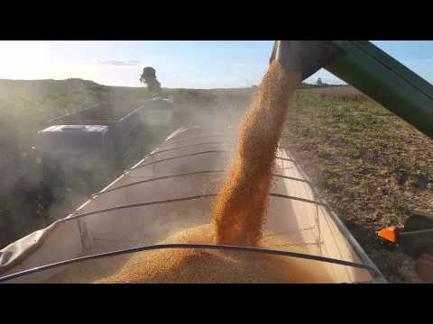 Carregando careta de milho em Marajá do Sena