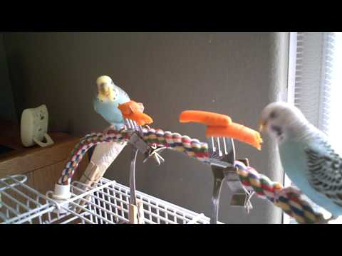 Wendy and Poppy eating carrots