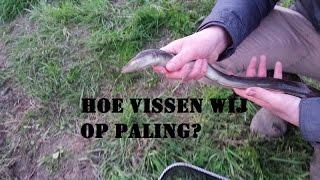 DFC - Hoe vissen wij op paling? (How do we fish for eel?)