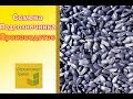 Семена подсолнечника под Гранстар (50 г) – АЛЕКСЕЙ