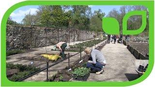 Ippenburger Gartentipps: Stauden vor dem Pflanzen auslegen!