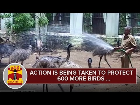 Action-is-being-Taken-to-Protect-600-More-Birds-in-Coimbatore-Zoological-Park--Thanthi-TV