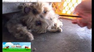Download Youtube: Tiny Yorkie almost gets crushed by propane tanks! NEW Hope For Paws rescue video!