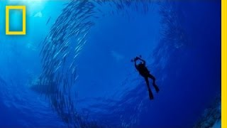 National Geographic Explorer-in-Residence Enric Sala dives deep into the waters of one of the most pristine places on Earth ...