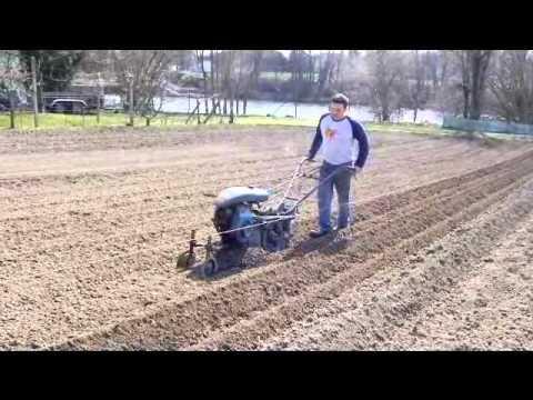 plantation des pommes de terre 2013