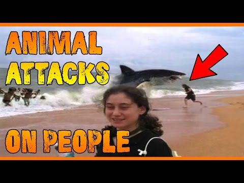 Worst Animal Attacks On People Compilation