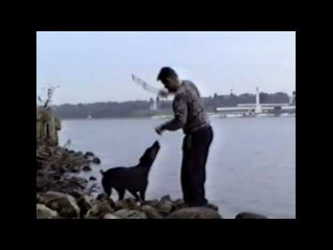 Dog wins, man loses - funny video
