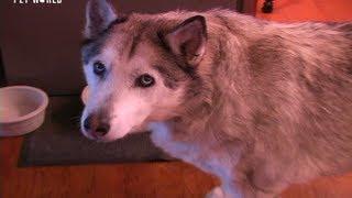 Steve Dale: Your Aging Pet