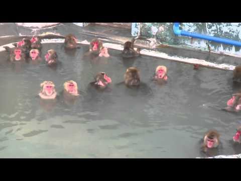 【影片】北海道猴泡汤  他俏皮你快乐