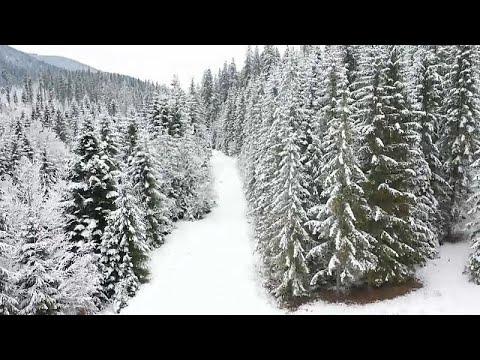 Rumänien: Gegner der Holzmafia leben gefährlich