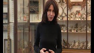Maisons-Alfort France  city pictures gallery : Reportage de Cécile Laronce à l'Ecole Vétérinaire de Maisons-Alfort (France 3)